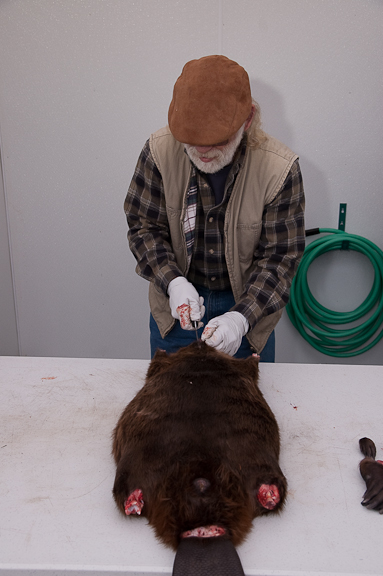 how to clean a beaver